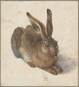 Hase von Albrecht Dürer